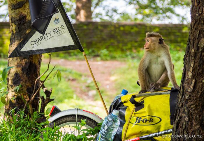 Monkey wanted a lift