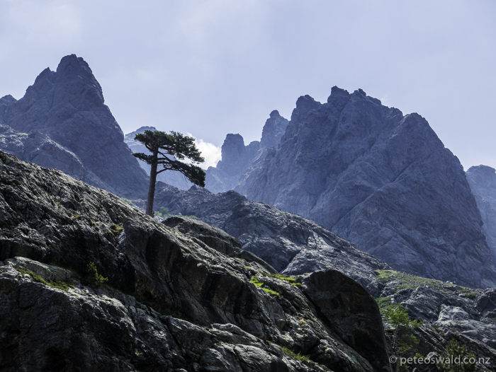 Flat top Corsican pines in such a rugged and beautiful landscape