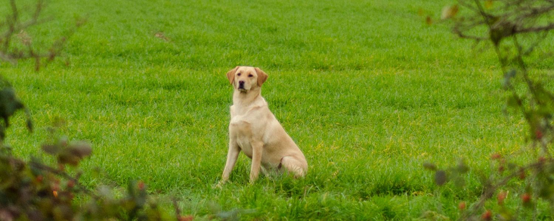 Dog-in-field.jpg