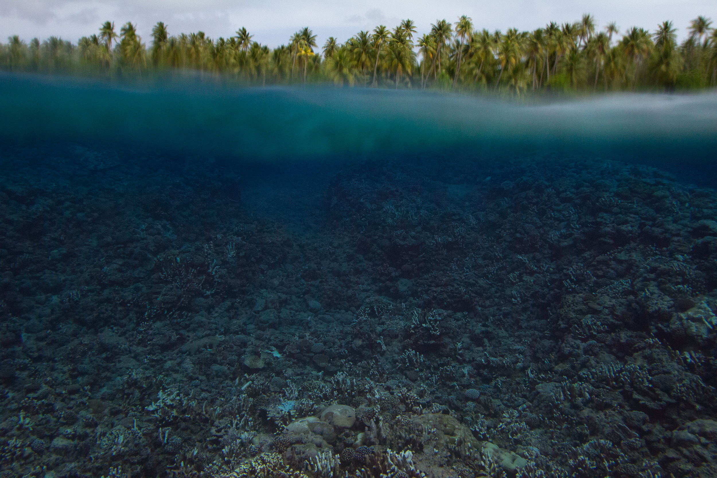 Coral reefs are vital barriers for the people of the atolls. In late 2014 a massive bleaching event struck the Marshall Islands and Kiribati. At Arno atoll in the Marshalls, this has resulted in mass coral deaths with much of the reef killed within a few weeks.