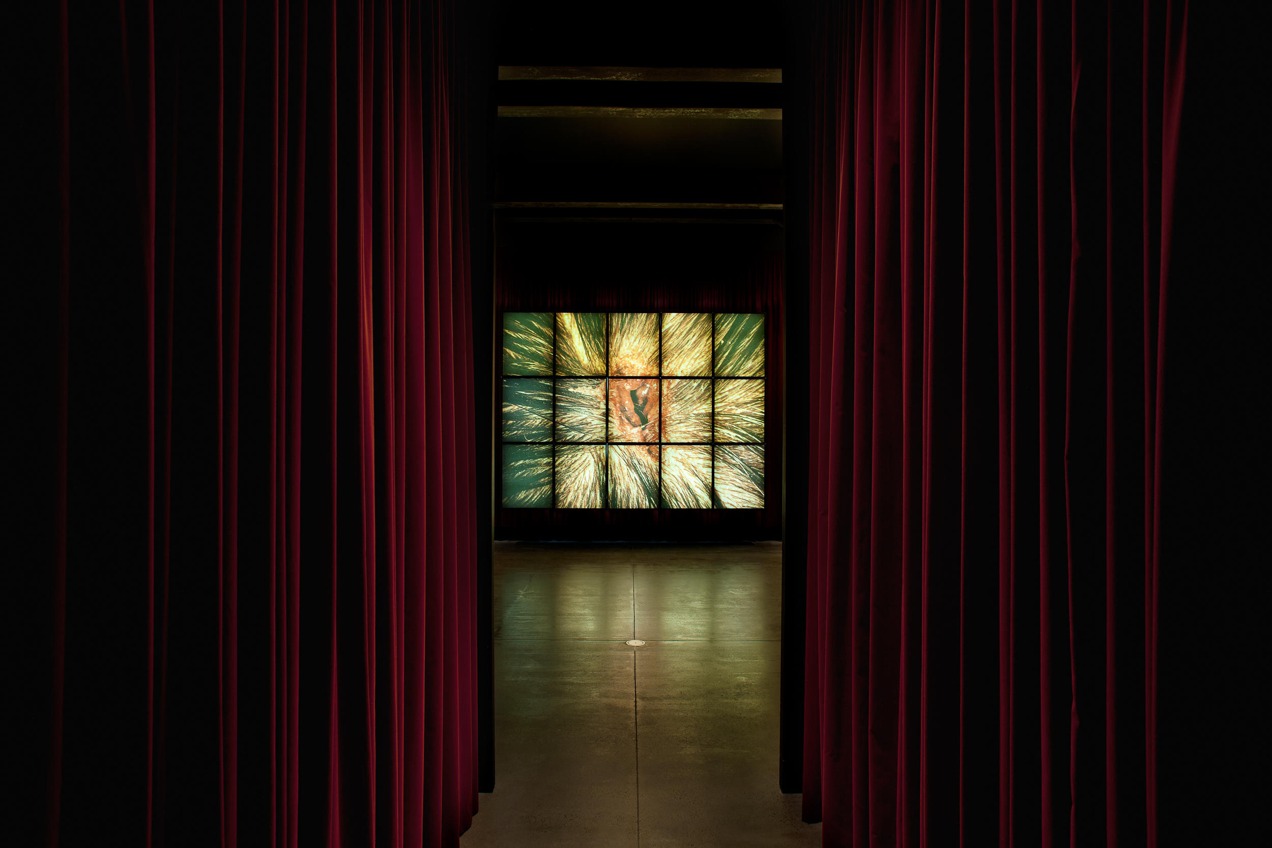 Bullet Hole 1988 to 1993  Mat Collishaw (1966, Nottingham, England; lives and works in London, England) Cibachrome mounted on 15 light boxes