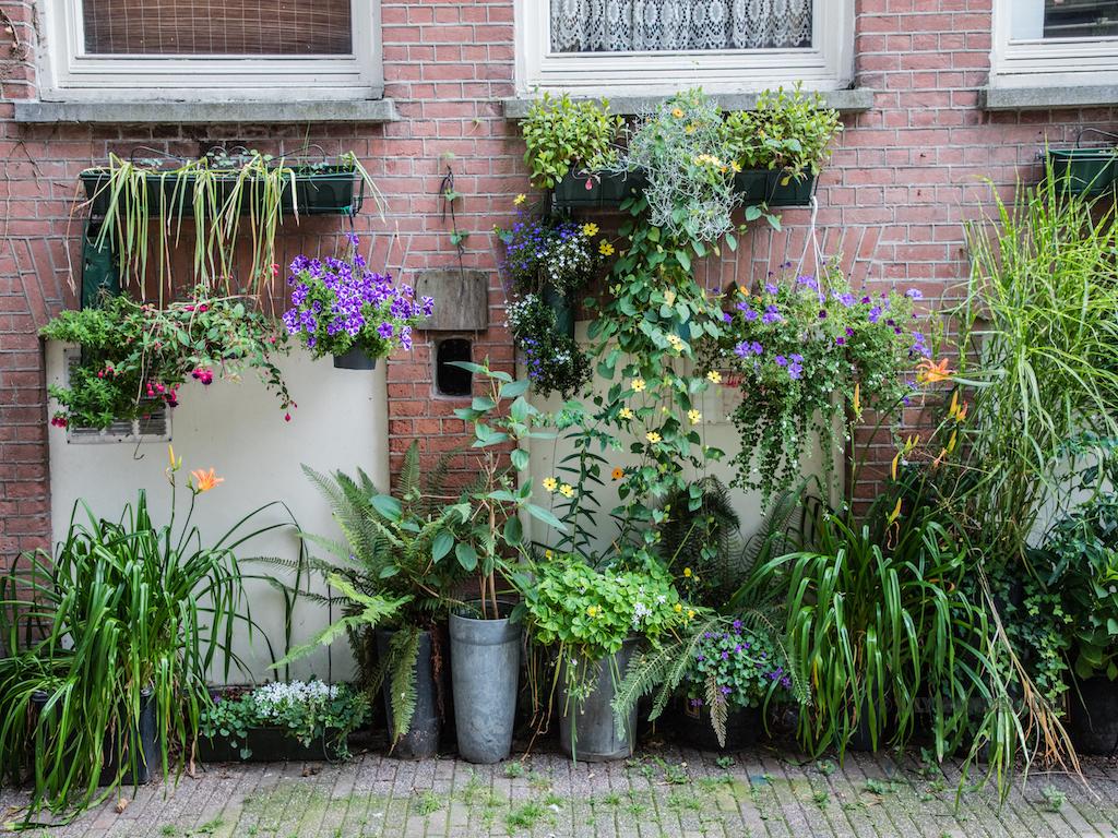 lilywanderlust-amsterdam-summer-gardens-5.jpg
