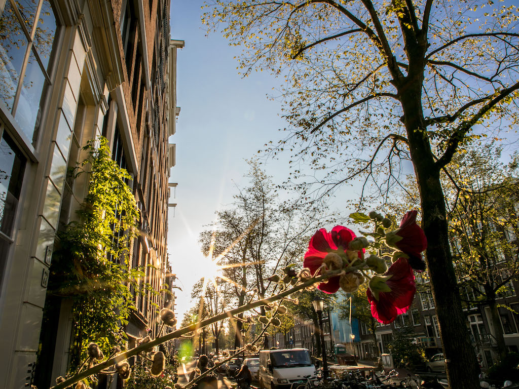 Amsterdam Autumn Sunflair 2017 by Lily Heaton-11.jpg