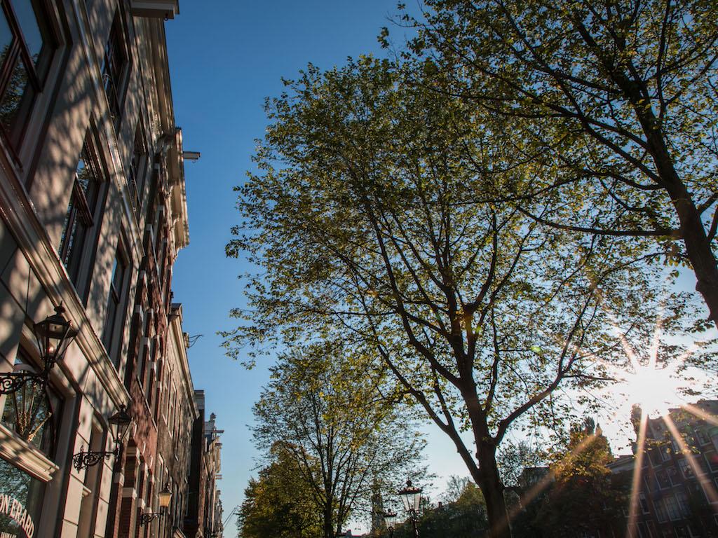 Amsterdam Autumn Sunflair 2017 by Lily Heaton-5.jpg
