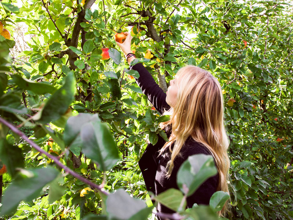 Apple Orchard 2017-4.jpg