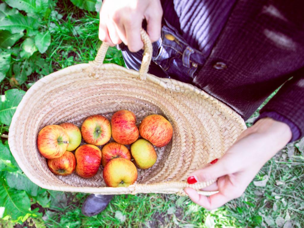 Apple Orchard 2017-7.jpg