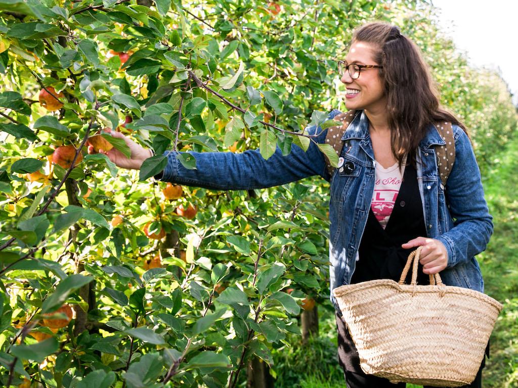 Apple Orchard 2017-10.jpg