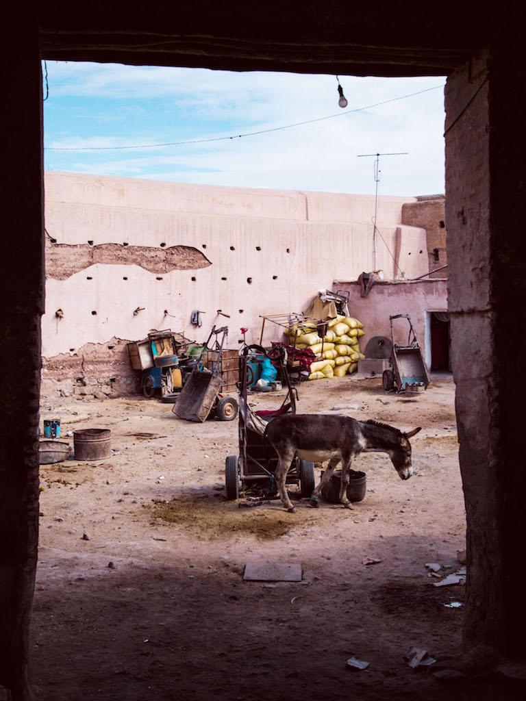 Marrakech-City-Scenes-128.jpg