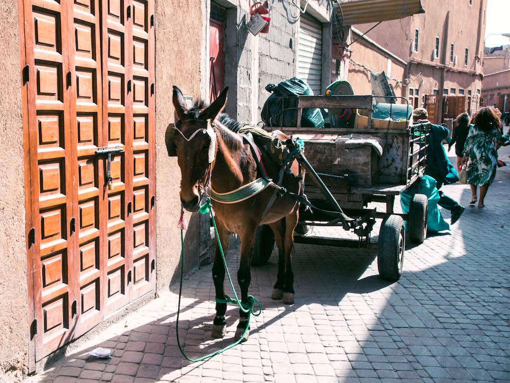 Marrakech-City-Scenes-8.jpg
