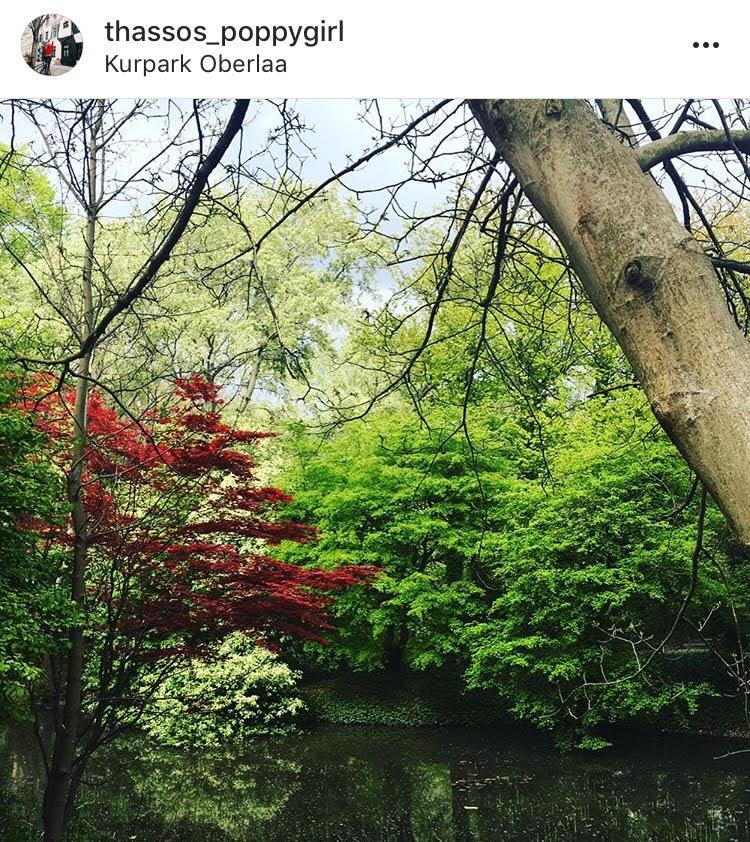 Паркът е огромен и в него се отглеждат различни видове цветя, растения, билки и др. Наситен е с цвят и аромати.