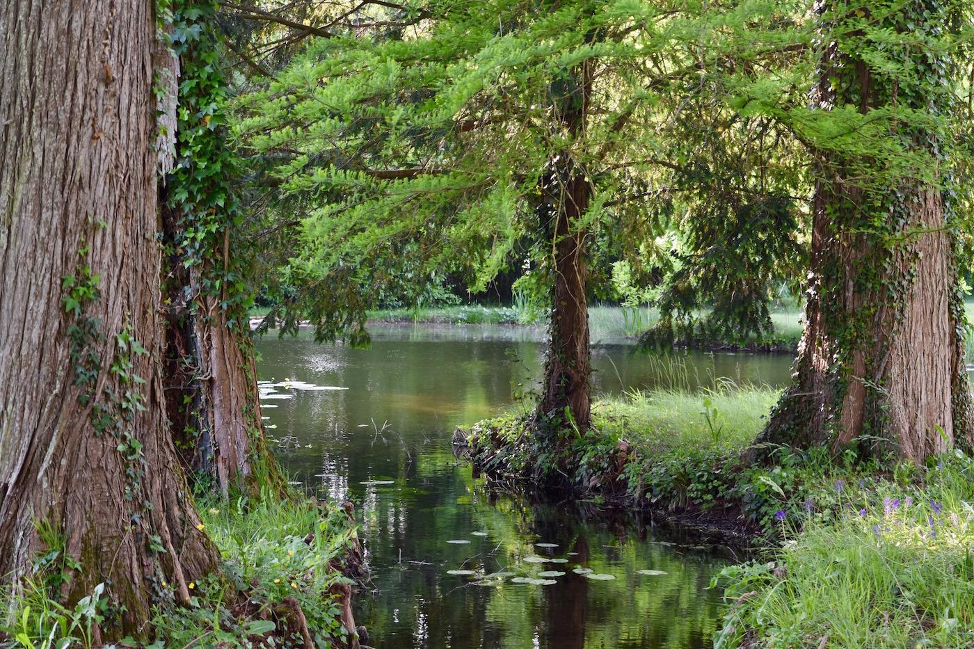 trees and stream to lake.jpg