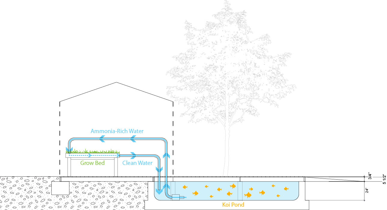 Aquaponics water flows