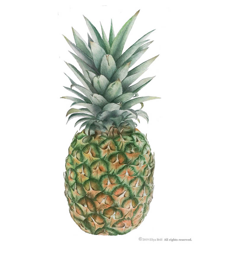Pineapple website 1.jpg