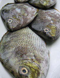 Unique and tasty dishes/entrees like Rabbitfish