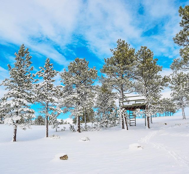 It's beginning to look a lot like winter here in Montana! We're looking forward to a White Christmas! • We also have a few new listings on the website! Check it out! (Link in bio)