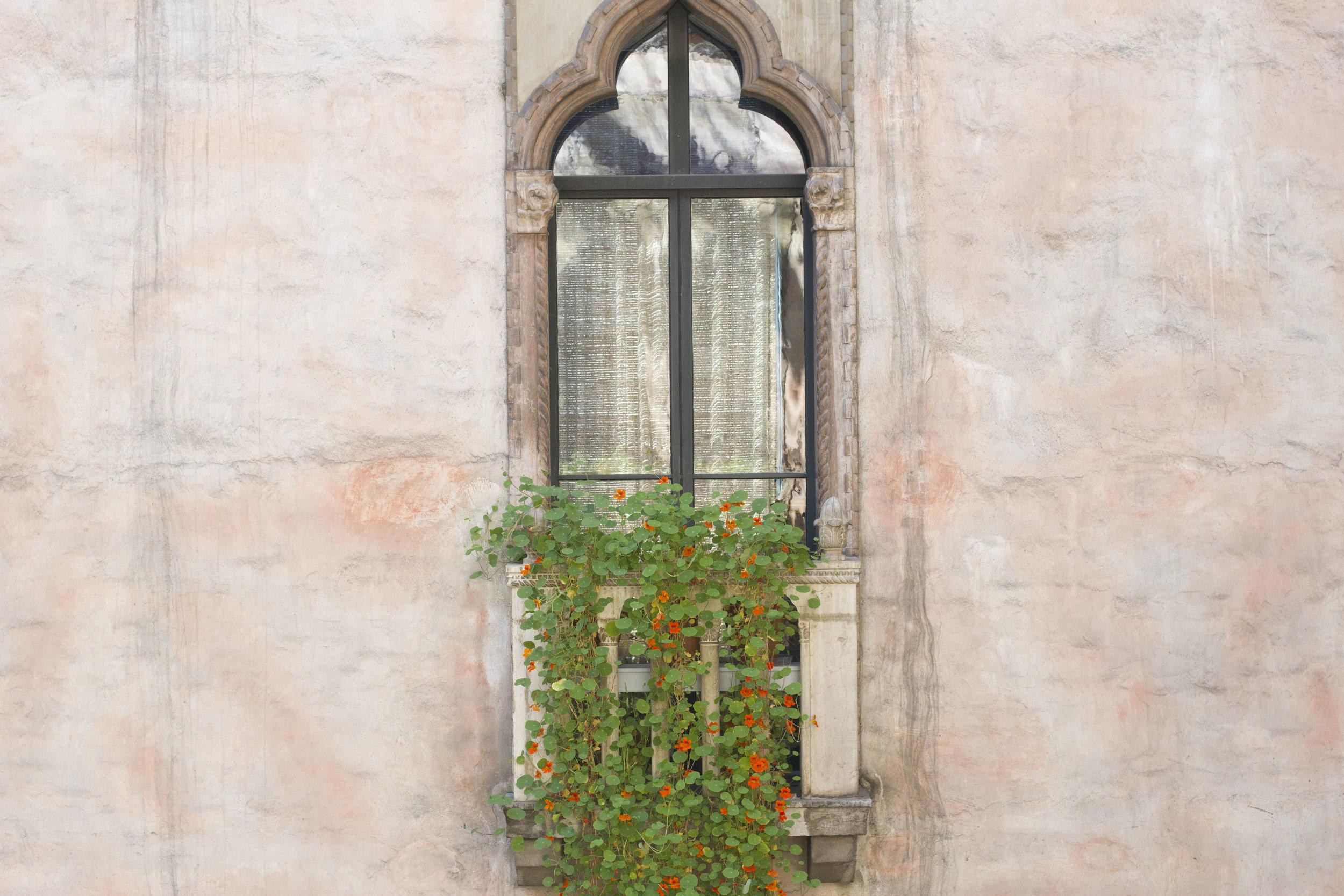 courtyard windows and vine.jpg