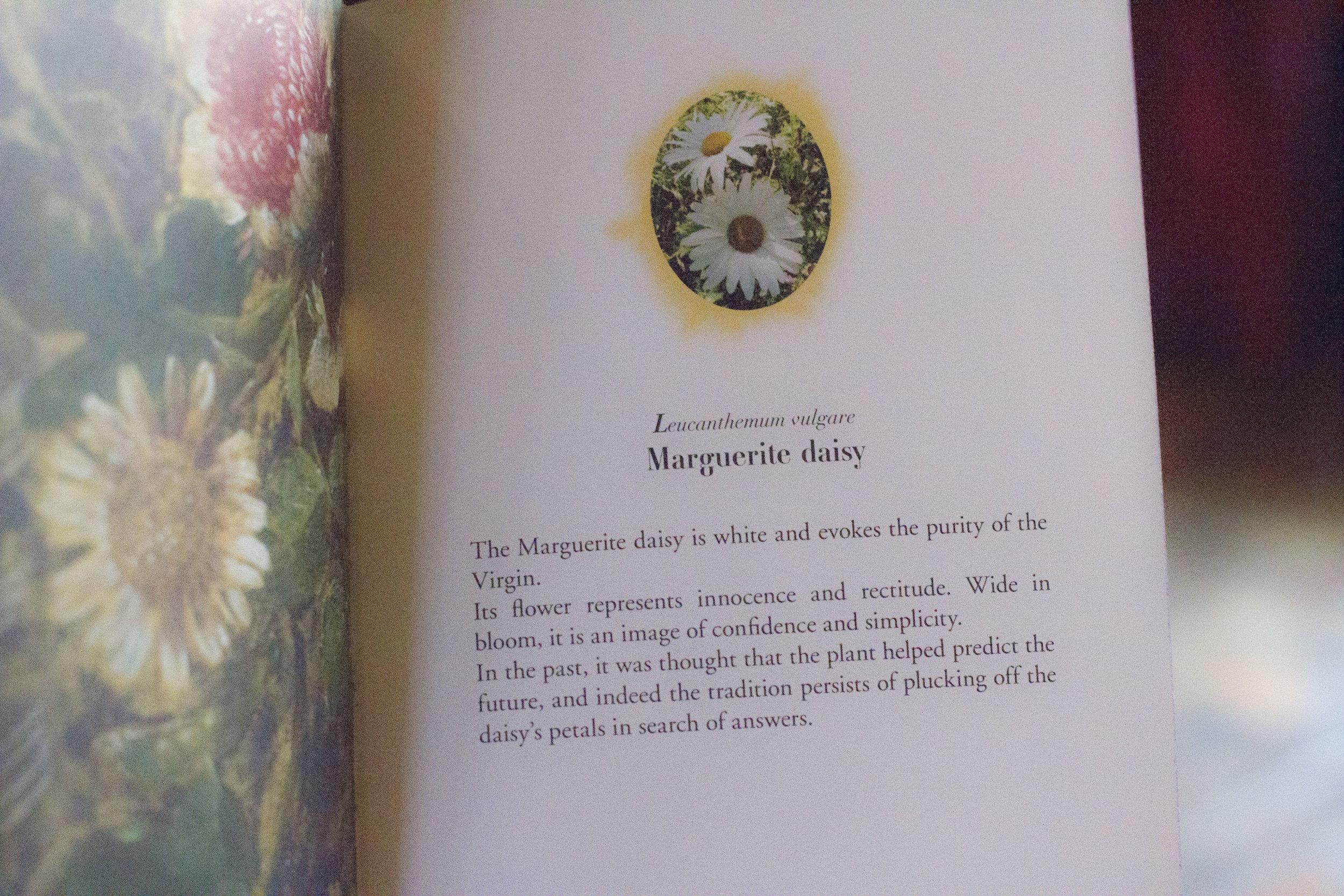 daisy book meaning.jpg