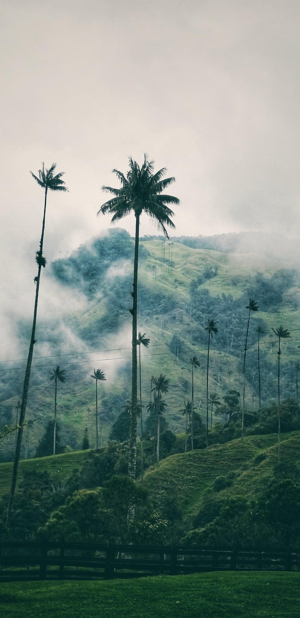 El valle de Cocora es un paisaje natural localizado en la cordillera central de los Andes colombianos, específicamente en el departamento del Quindío, en el área de influencia del Parque nacional natural Los Nevados. Cuenta con algunas poblaciones del árb
