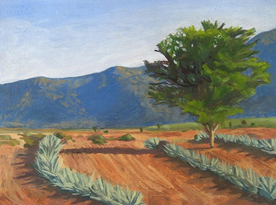 Agaves near San Marcos