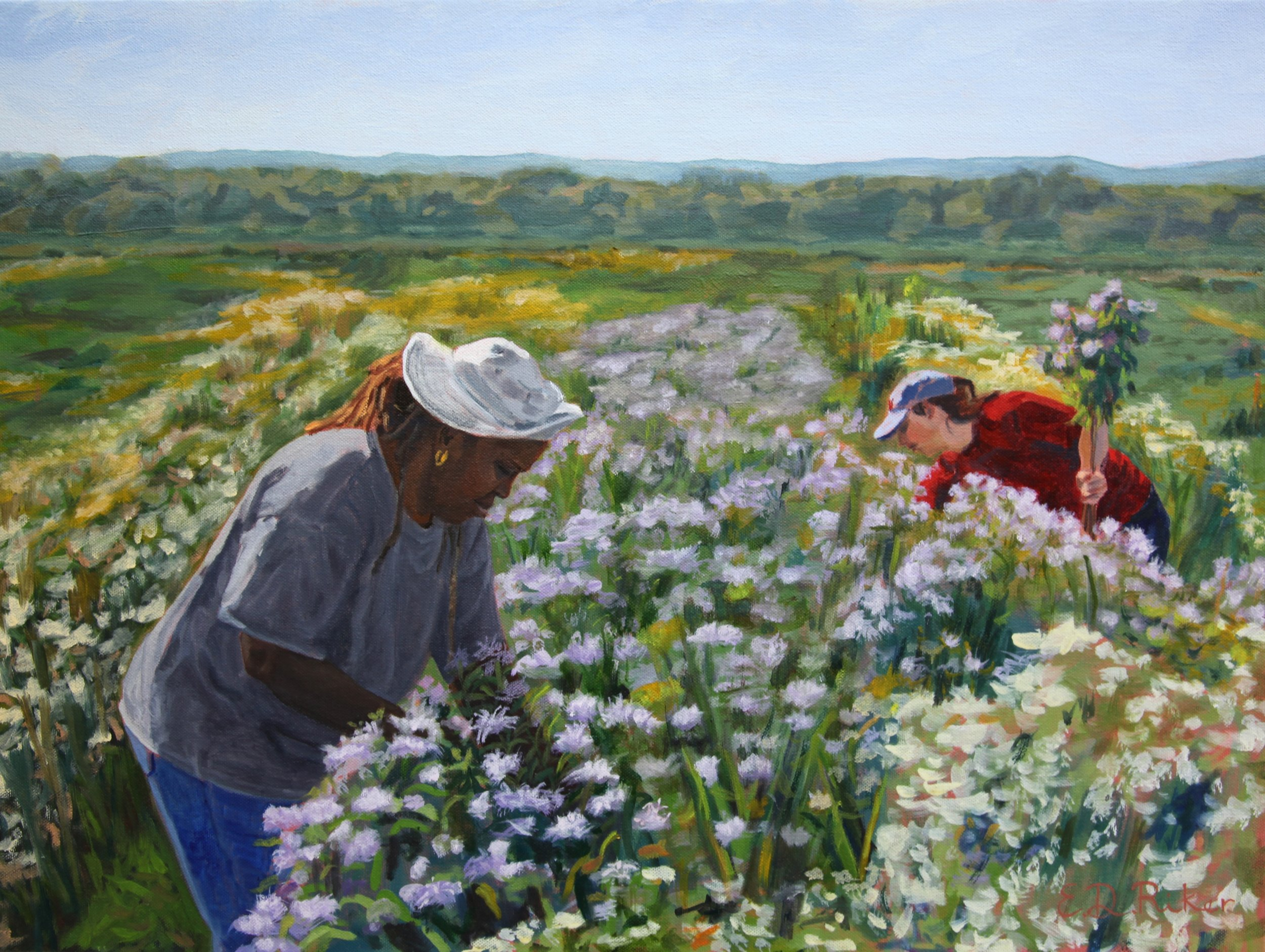 Harvesting Bee Balm