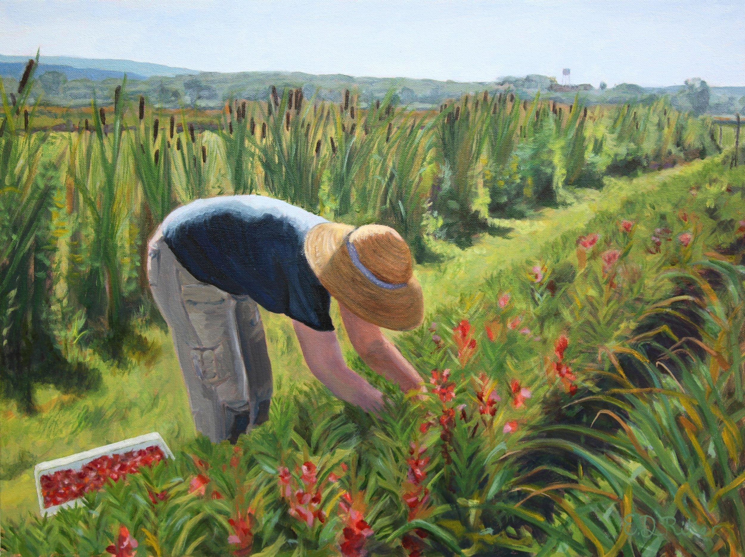 Picking Peppermint Balsam
