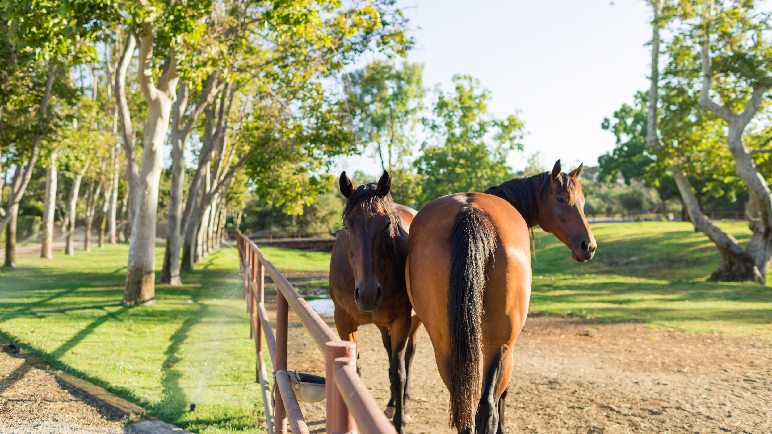 TRUSTED RESOURCES - At Alamo Pintado we research and utilize the best veterinary products and services available to help support your horse's health and recovery. These resources have our trust after years of results seen in clinical practice.