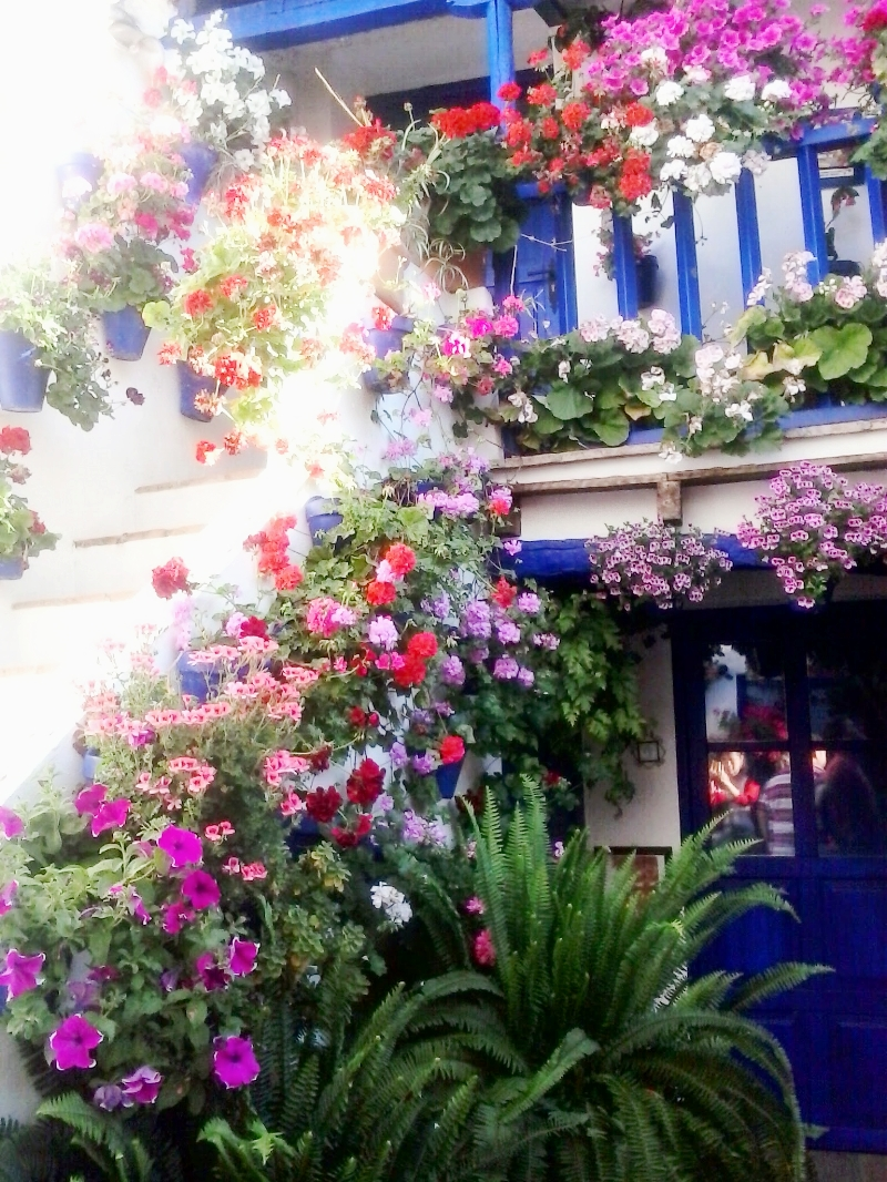 The people of Córboda sure love their flowers- you've got to check out  los patios !