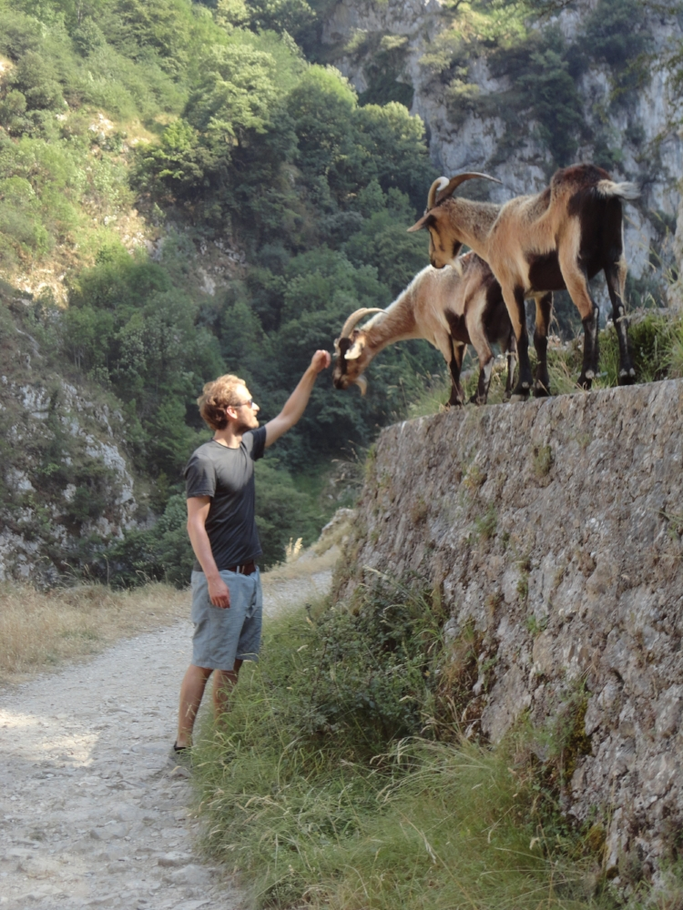 Peter and the goats (he made lots of wild friends).