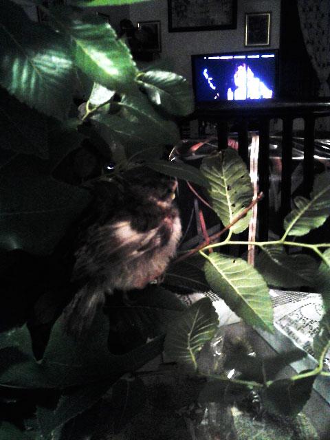 bird-watching-tv-blog.jpg