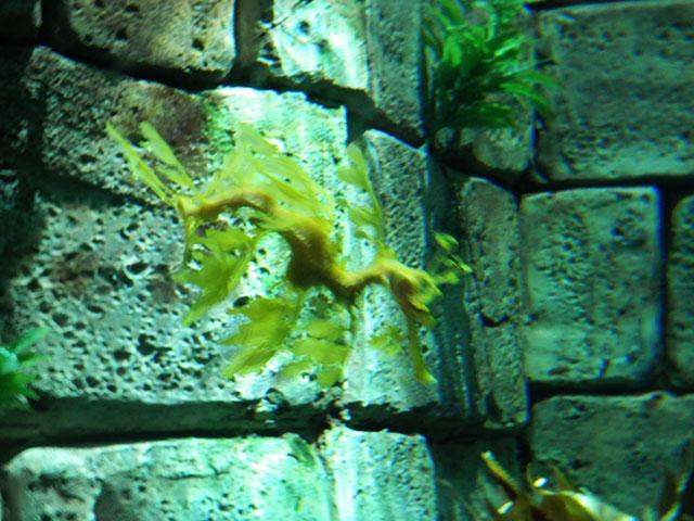 SW sea dragon.jpg