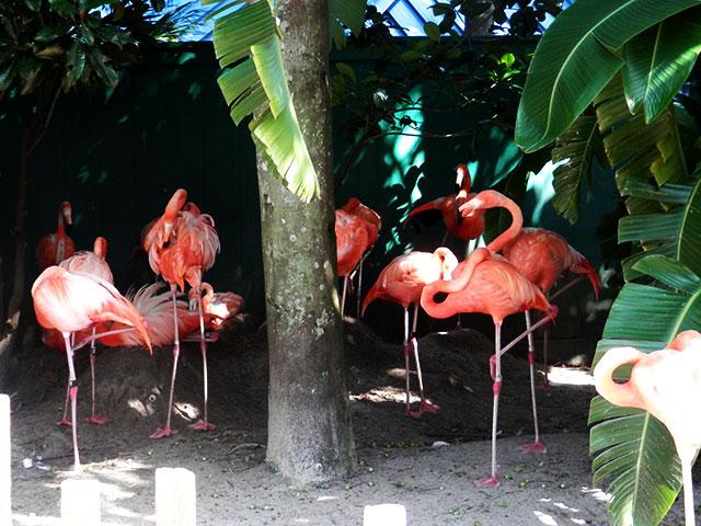 SW flamingos.jpg