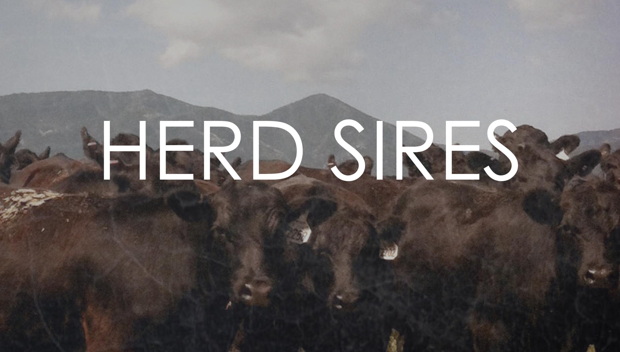 herd sires.png