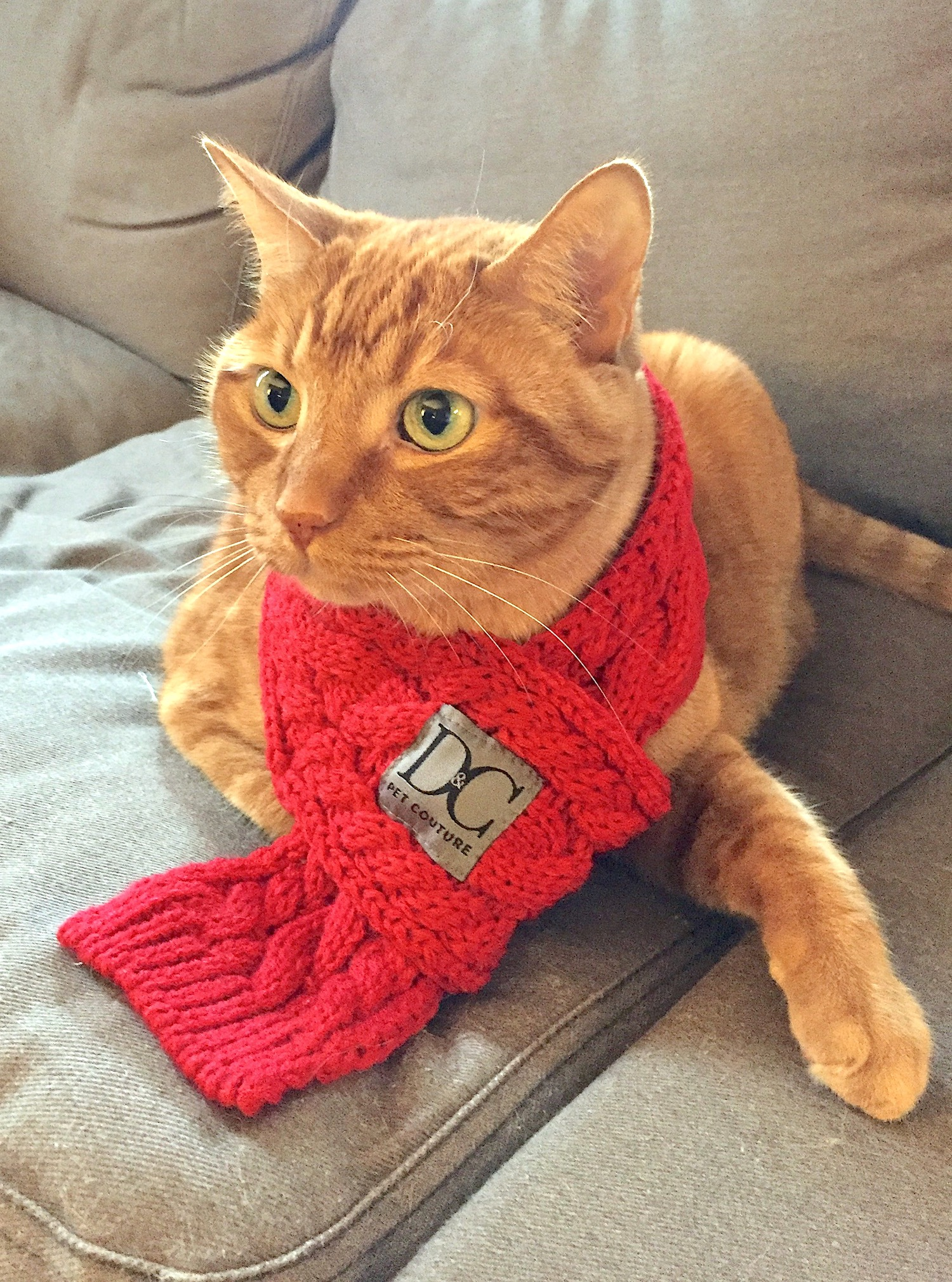d_c_bella_red_gingercat.JPG