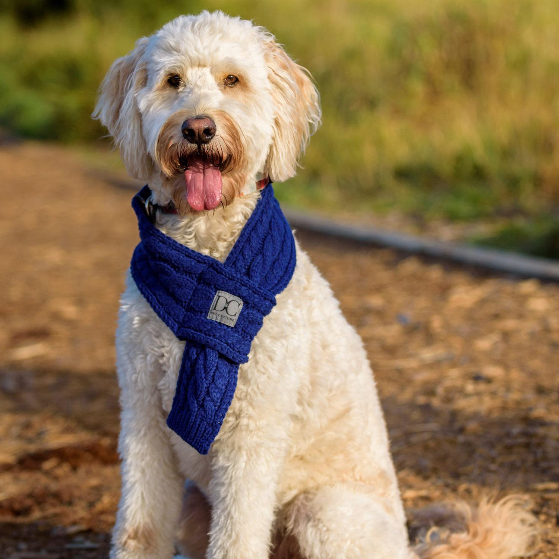 d_c_bella_blue_whitedog.jpg
