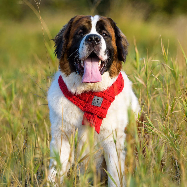d_c_bella_red_browndog.jpg
