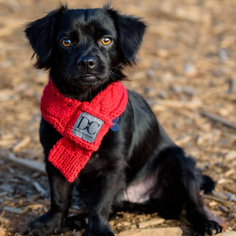 d_c_bella_red_blackdog.PNG