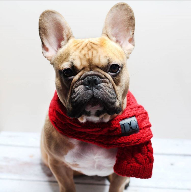 D&C Pet Couture - Add swag to their wag with our stylish range of pet clothing and fashion accessories. From scarves and bandanas, to collars and leads, you know that your dog or cat will look perfectly groomed, because D&C Pets always walk in style