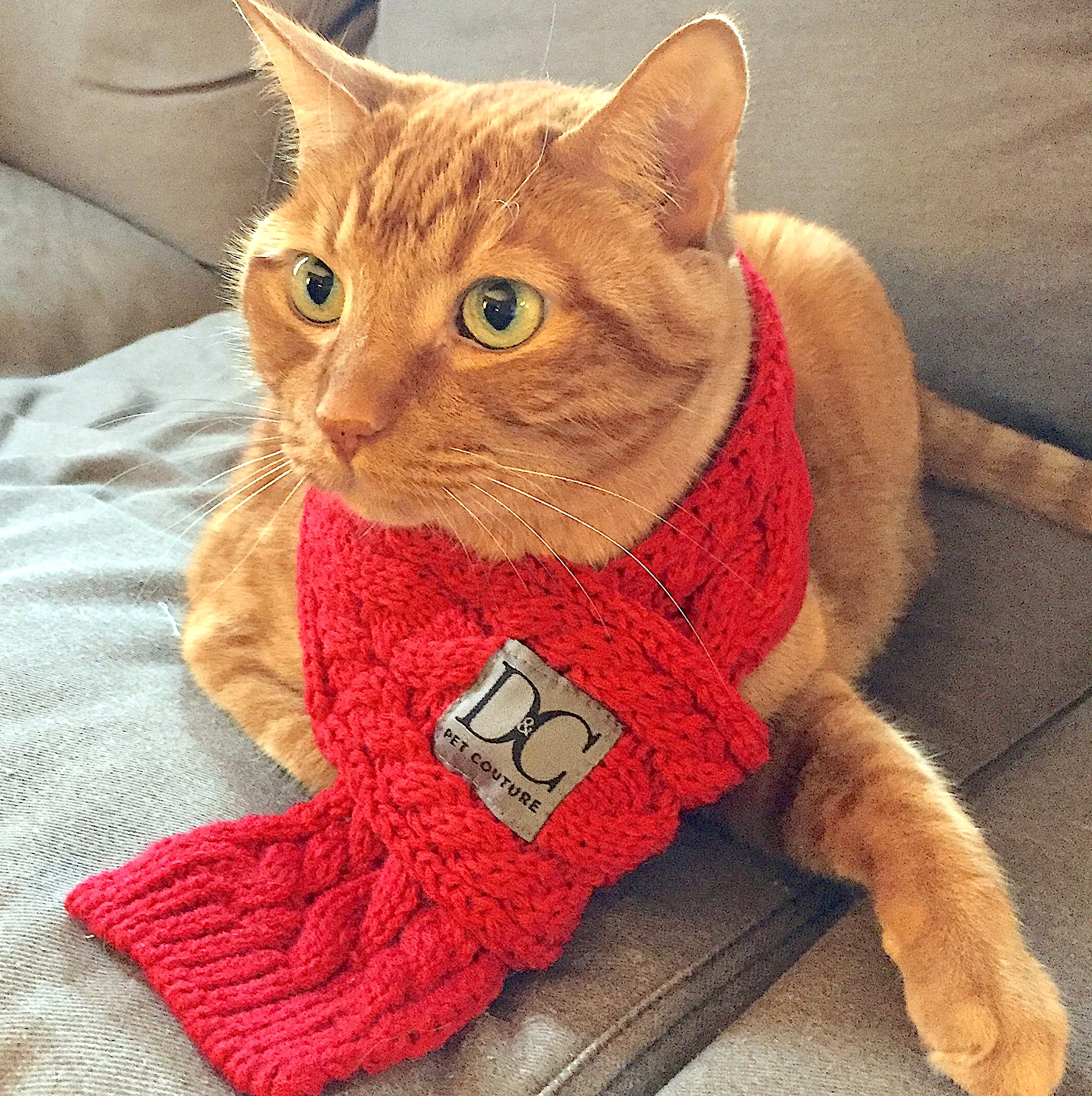 Cat in Red Scarf Square.JPG