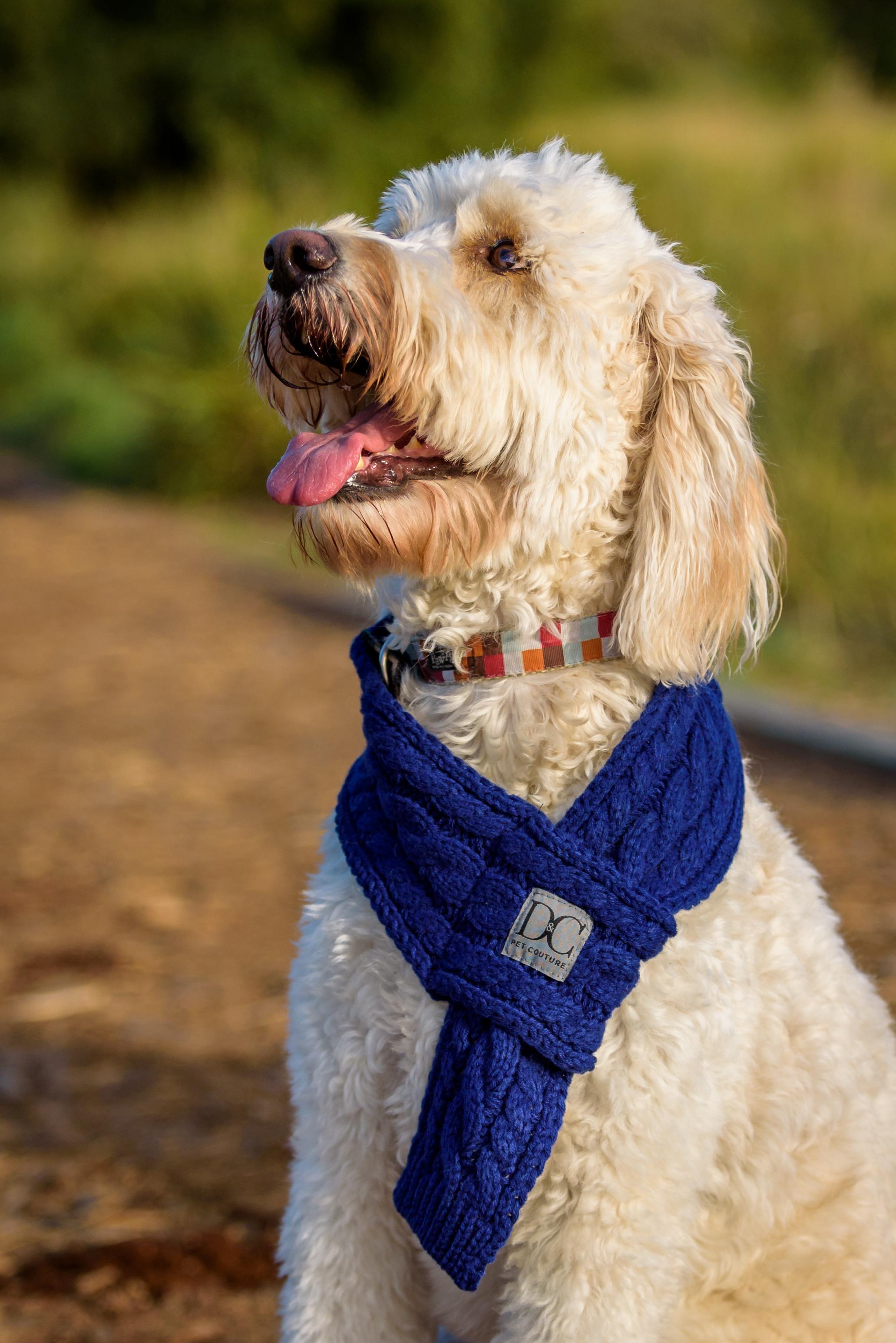 2017-09_Dogs_KSN-2269_az.jpg