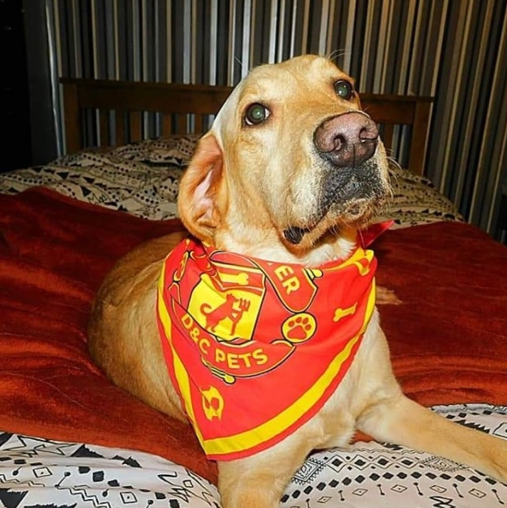 marley_the_golden_lab_manchester_bandana.jpg