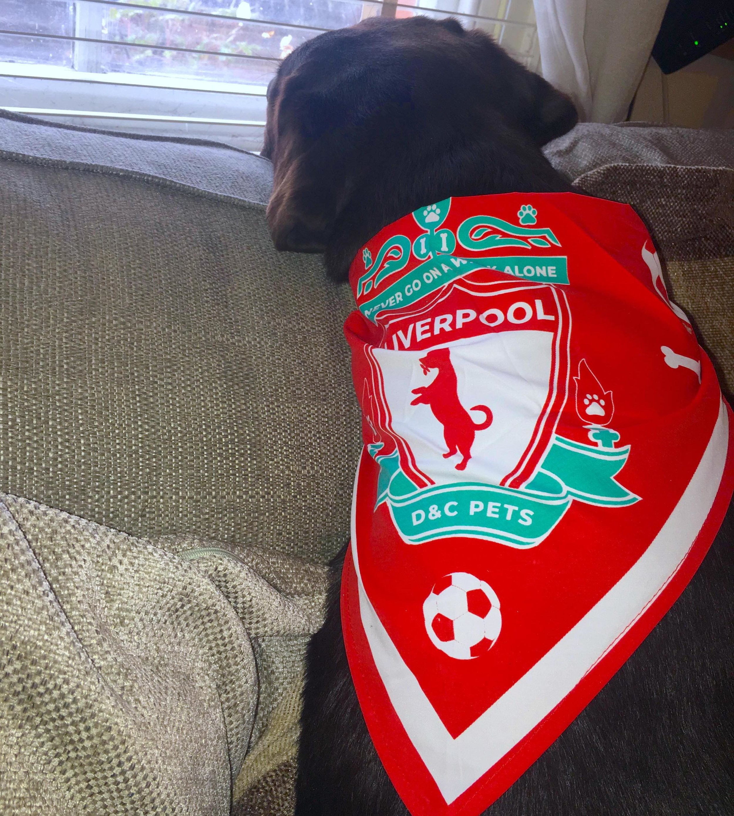 baloo_supporting_liverpool.jpg