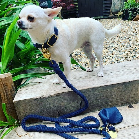 Rope collar and lead as worn by @chihuahualeone 🐶💙🐶 • • • • • #petstagram #pets #animal #dogoftheday #doglover #petsofinstagram #animals #ilovemydog #instapet #adorable #puppies #instapuppy #petsagram #pup #dogs_of_instagram #cats #instagramdogs #catstagram #kitten #kitty #catsofinstagram #instacat #catlover #puppylove #catoftheday #ilovemycat #puppiesofinstagram #dandcpets #dandcpetcouture #ilovemydog