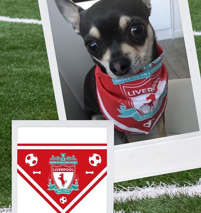 Buy Your Dog The Best Gift Ever - A Liverpool Dog Bandana! • • • • • #lfc #ynwa #liverpoolfc #anfield #klopp #lfcfamily #liverpool #kop #thekop #weareliverpool #coutinho #stevengerrard #gerrard #reds #firmino #anfieldroad #henderson #dogoftheday #thereds #wegoagain #lovelfc #premierleague #doglover #jft96 #kopites #manchesterunited #redmen #ilovemydog #petstagram #youllneverwalkalone