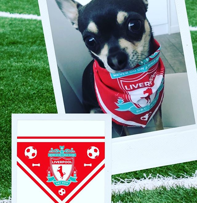 Support Liverpool in the Champions League with our cute Dog Bandana! ⚽️ 🐶 🏆