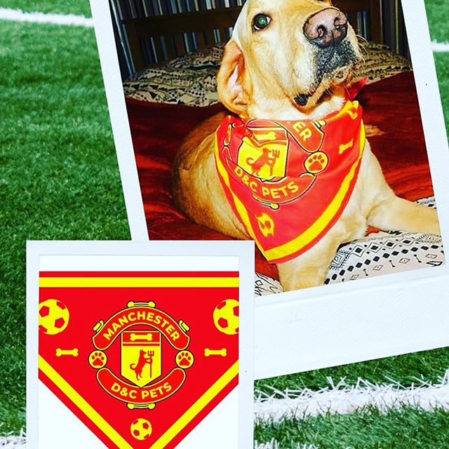 #manchesterunited Dog Bandana available in Small & Large!