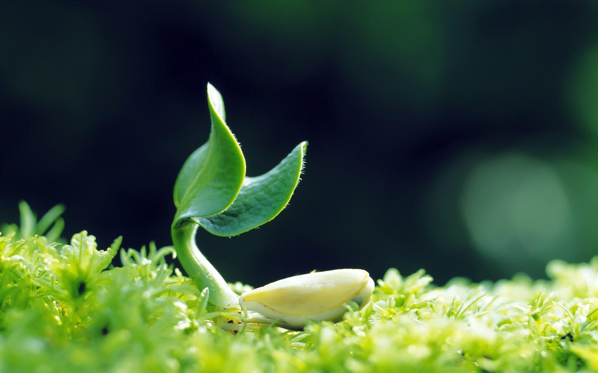 plantss-is.jpg