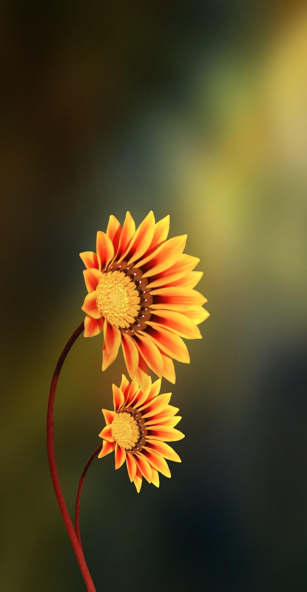glowingasteraceae.jpg