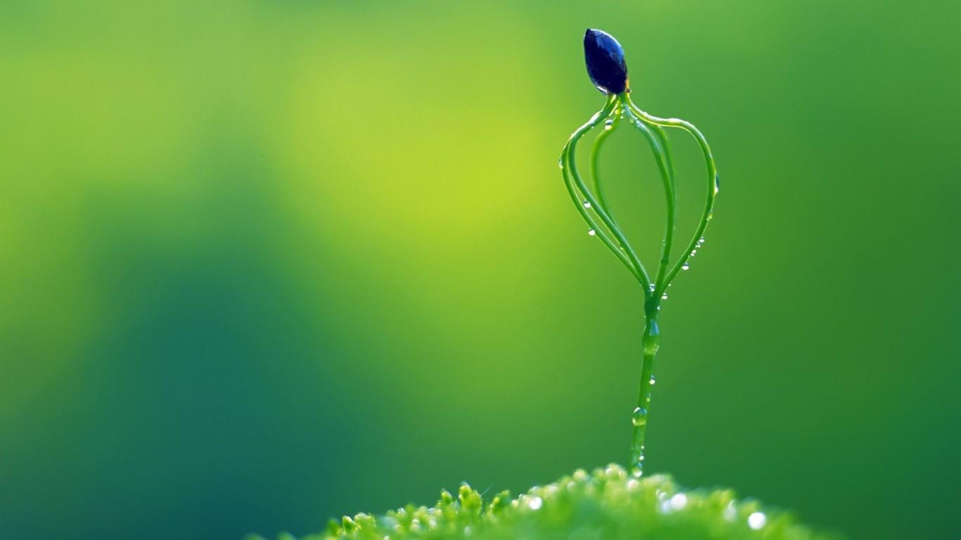 Amazing-Macro-Nature-HD-Wallpaper-1366x768.jpg