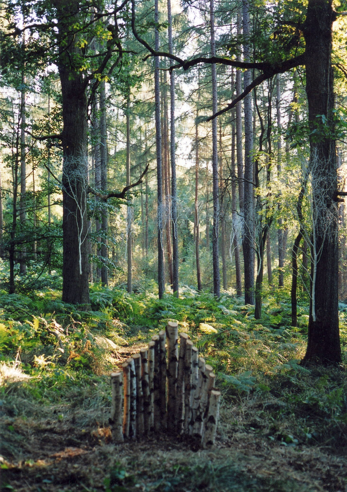 White birches installation, Forest of Dean Sculpture Trail