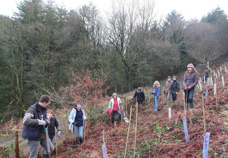 Enlarging the Forest of Dean